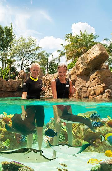 Discovery Cove Orlando Florida