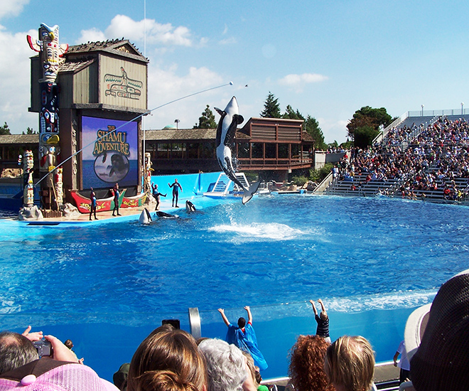 SeaWorld near Westgate Palace in Orlando