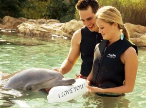 discovery-cove-couple-dolphin