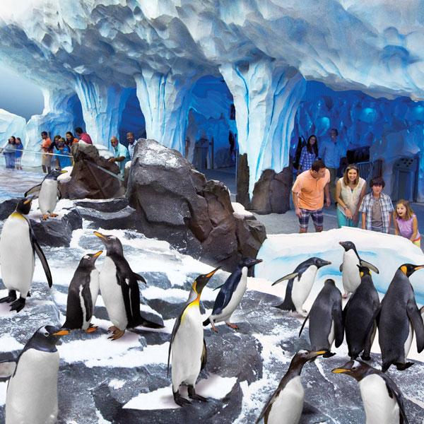 Celebración de Navidad en SeaWorld