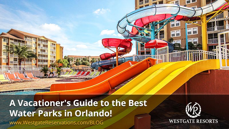 A Vacationer's Guide to the Best Water Parks in Orlando!