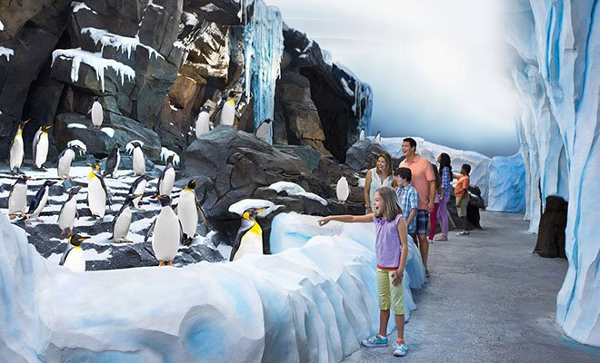 Antartica Empire of the Penguin at SeaWorld Orlando see a whole colony of penguins