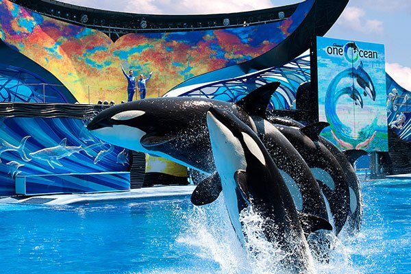 One Ocean exhibit at SeaWorld Orlando
