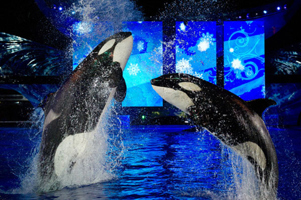 Sea World Orlando | Christmas Vacation Deals