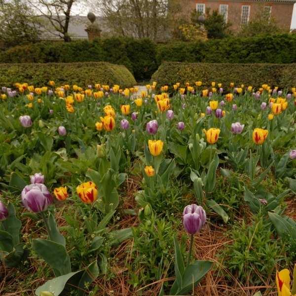 Williamsburg VA Historic Gardens